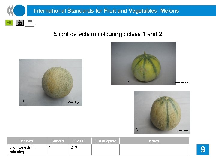 International Standards for Fruit and Vegetables: Melons Slight defects in colouring : class 1