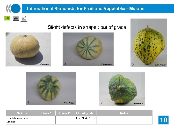 International Standards for Fruit and Vegetables: Melons Slight defects in shape : out of