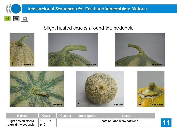 International Standards for Fruit and Vegetables: Melons Slight healed cracks around the peduncle 1