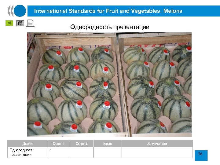 International Standards for Fruit and Vegetables: Melons Однородность презентации 2 1 Дыни Однородность презентации