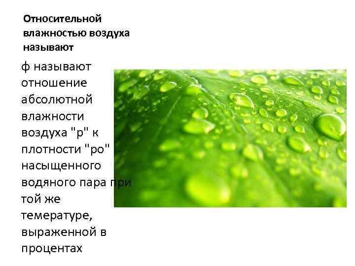 Относительной влажностью воздуха называют φ называют отношение абсолютной влажности воздуха