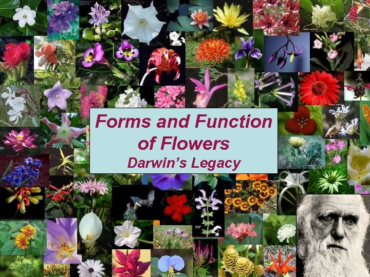 Forms and Function of Flowers Darwin's Legacy