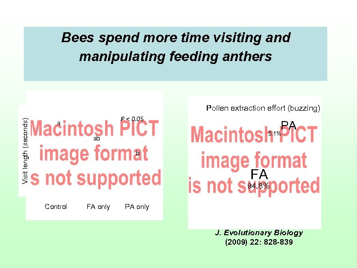 Bees spend more time visiting and manipulating feeding anthers Visit length (seconds) Pollen extraction