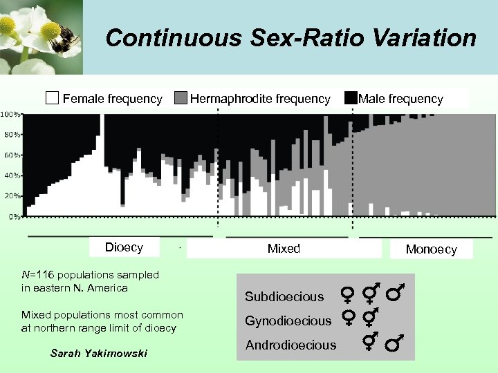 Continuous Sex-Ratio Variation Female frequency Dioecy N=116 populations sampled in eastern N. America Mixed