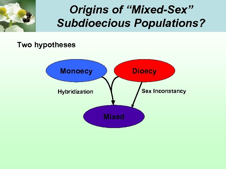 """Origins of """"Mixed-Sex"""" Subdioecious Populations? Two hypotheses Monoecy Dioecy Sex Inconstancy Hybridization Mixed"""