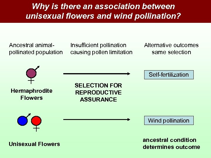 Why is there an association between unisexual flowers and wind pollination? Ancestral animalpollinated population