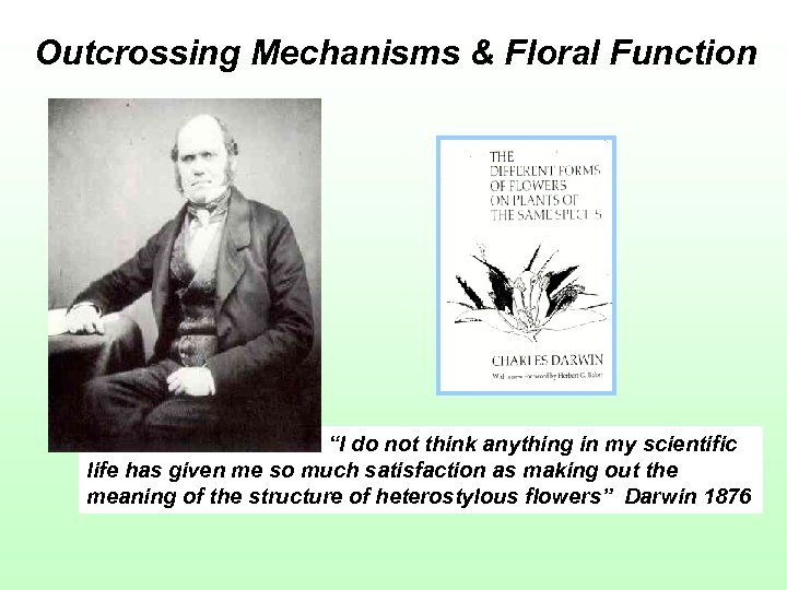 """Outcrossing Mechanisms & Floral Function """"I do not think anything in my scientific life"""