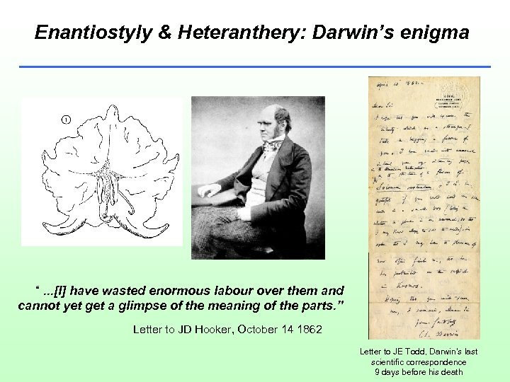 """Enantiostyly & Heteranthery: Darwin's enigma """". . . [I] have wasted enormous labour over"""