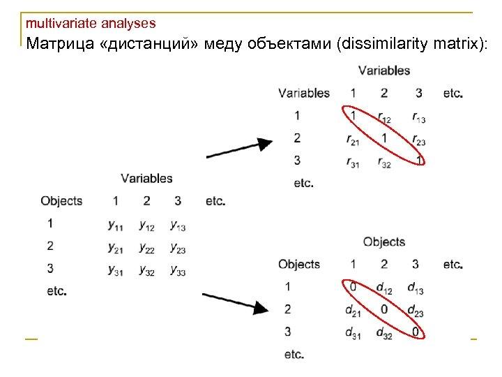 multivariate analyses Матрица «дистанций» меду объектами (dissimilarity matrix):