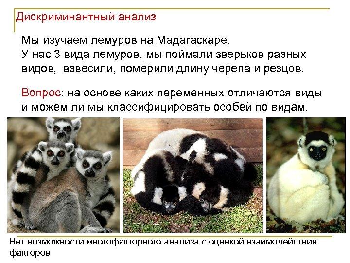 Дискриминантный анализ Мы изучаем лемуров на Мадагаскаре. У нас 3 вида лемуров, мы поймали
