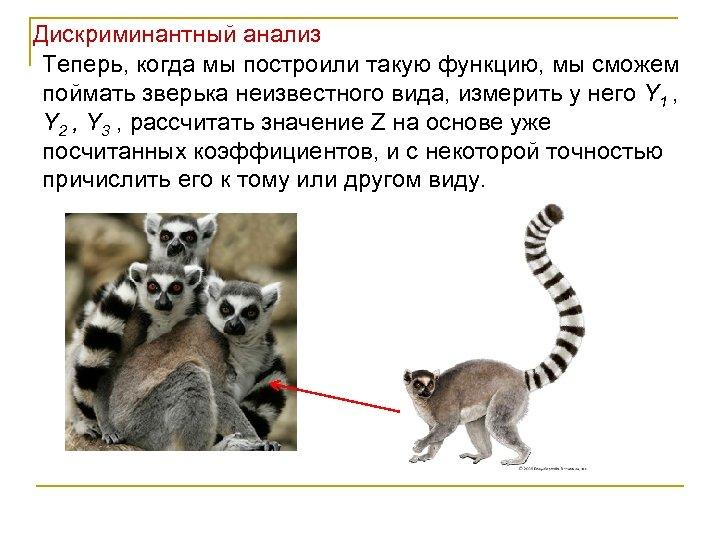 Дискриминантный анализ Теперь, когда мы построили такую функцию, мы сможем поймать зверька неизвестного вида,