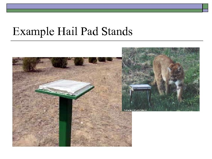 Example Hail Pad Stands