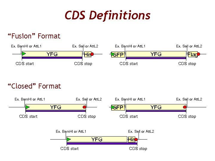 "CDS Definitions ""Fusion"" Format Ex. Bam. HI or Att. L 1 Ex. Sal. I"