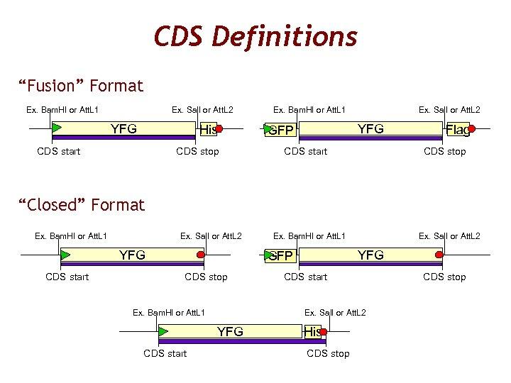 """CDS Definitions """"Fusion"""" Format Ex. Bam. HI or Att. L 1 Ex. Sal. I"""