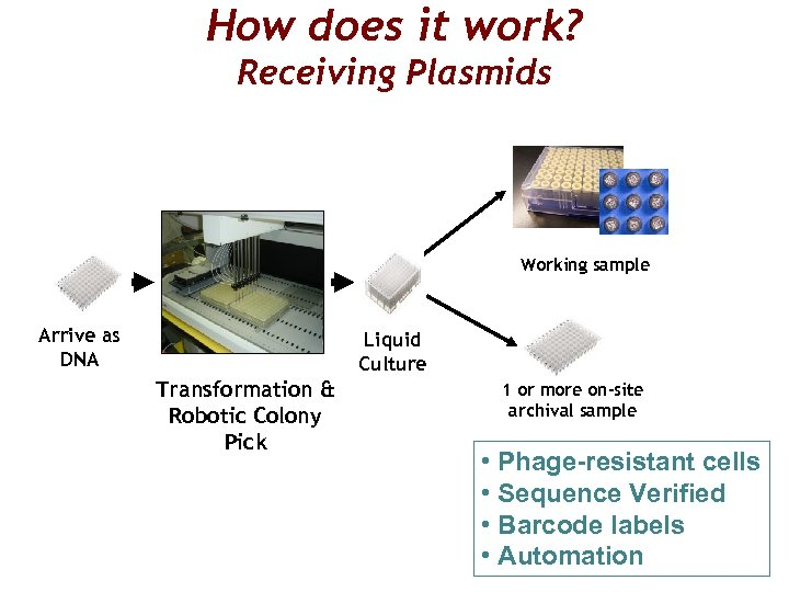 How does it work? Receiving Plasmids Working sample Arrive as DNA Liquid Culture Transformation