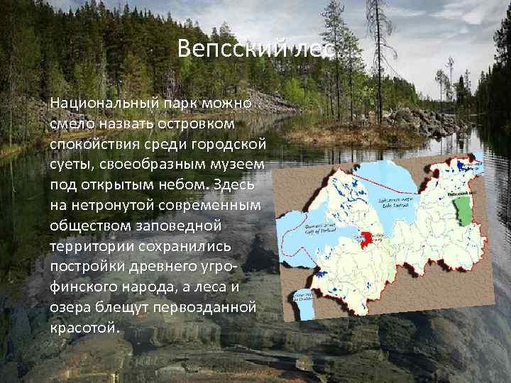 Вепсский лес Национальный парк можно смело назвать островком спокойствия среди городской суеты, своеобразным музеем