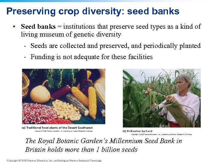 Preserving crop diversity: seed banks • Seed banks = institutions that preserve seed types