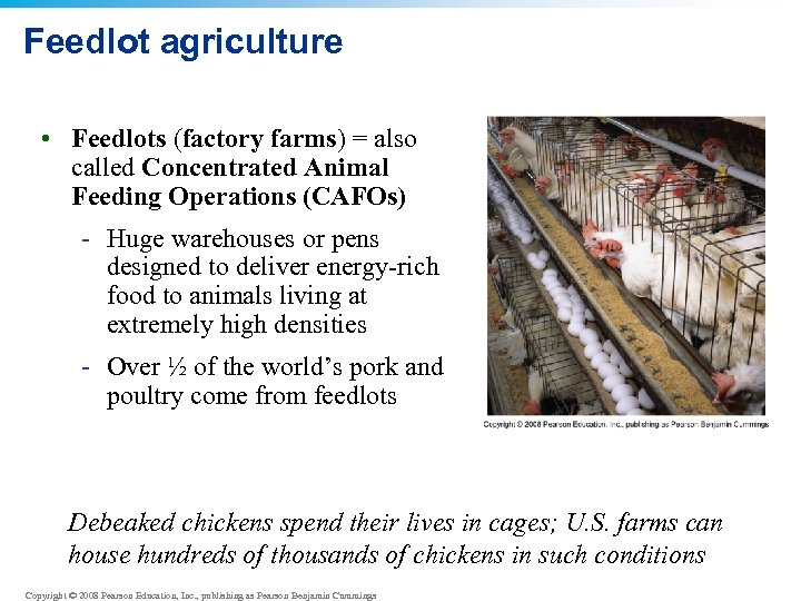Feedlot agriculture • Feedlots (factory farms) = also called Concentrated Animal Feeding Operations (CAFOs)