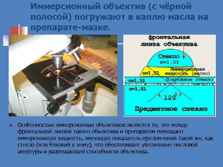 Иммерсионный объектив (с чёрной полосой) погружают в каплю масла на препарате-мазке. n Особенностью иммерсионных
