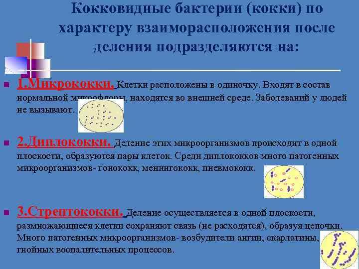 Кокковидные бактерии (кокки) по характеру взаиморасположения после деления подразделяются на: n 1. Микрококки. Клетки