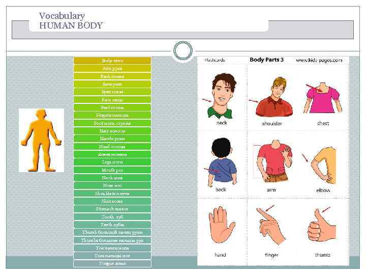 Vocabulary HUMAN BODY Body тело Arm рука Back спина Ears уши Eyes глаза Face