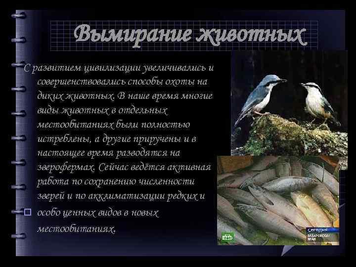Вымирание животных С развитием цивилизации увеличивались и совершенствовались способы охоты на диких животных. В