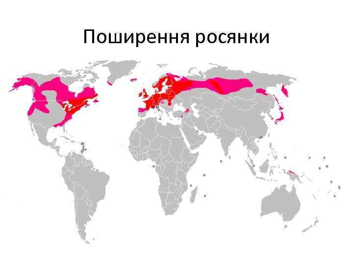 Поширення росянки