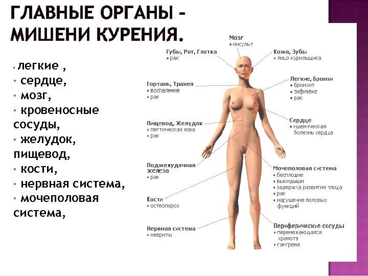 ГЛАВНЫЕ ОРГАНЫ – МИШЕНИ КУРЕНИЯ. легкие , • сердце, • мозг, • кровеносные сосуды,