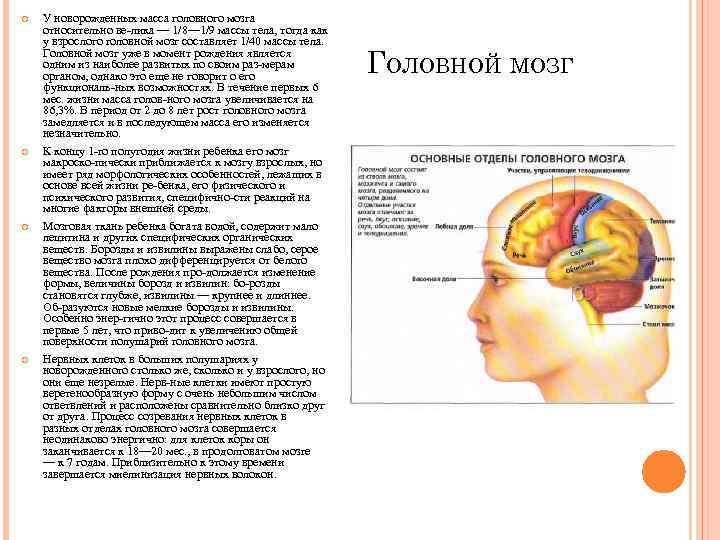 У новорожденных масса головного мозга относительно ве лика — 1/8— 1/9 массы тела,