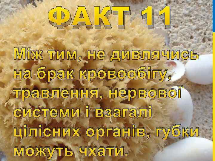 ФАКТ 11 Між тим, не дивлячись на брак кровообігу, травлення, нервової системи і взагалі