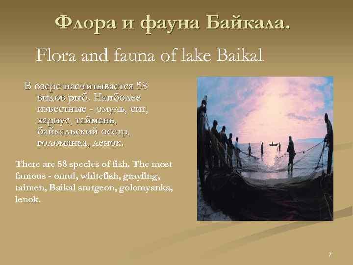 Флора и фауна Байкала. Flora and fauna of lake Baikal. В озере насчитывается 58