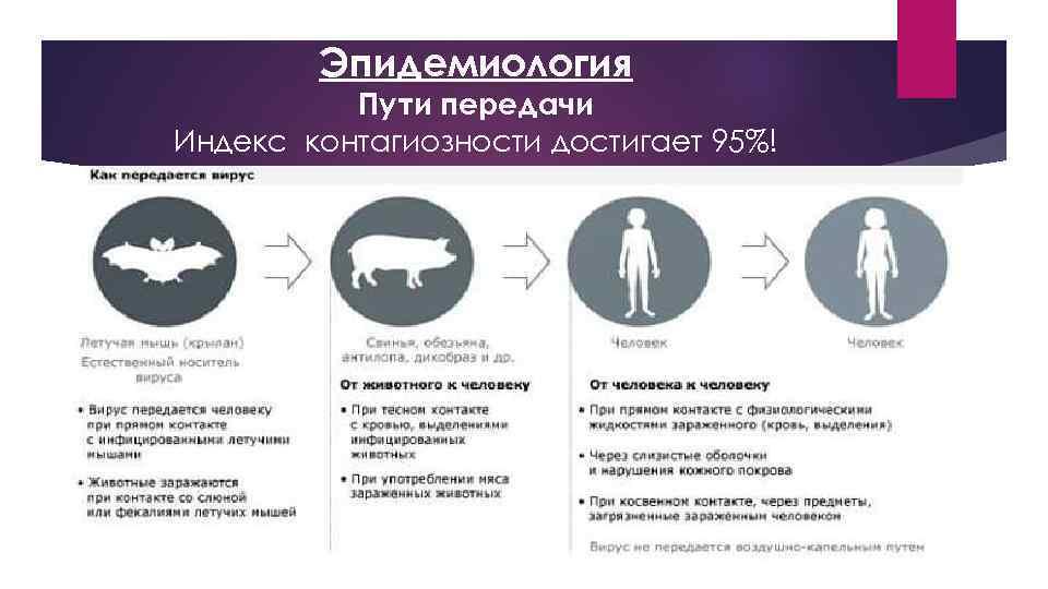 Эпидемиология Пути передачи Индекс контагиозности достигает 95%!