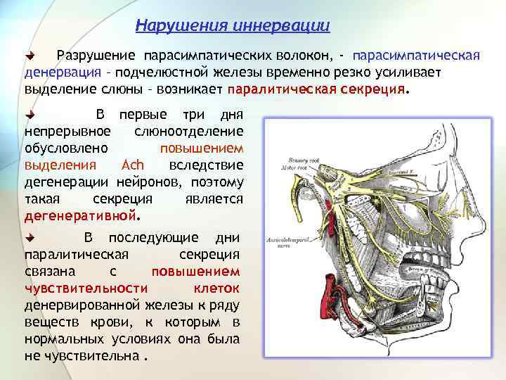 Нарушения иннервации Разрушение парасимпатических волокон, - парасимпатическая денервация – подчелюстной железы временно резко усиливает