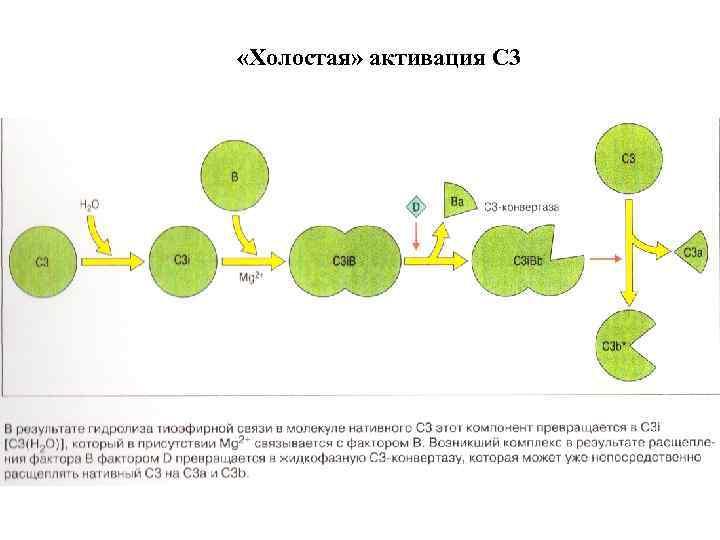 «Холостая» активация С 3