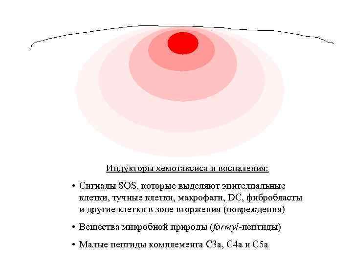 Индукторы хемотаксиса и воспаления: • Сигналы SOS, которые выделяют эпителиальные клетки, тучные клетки, макрофаги,