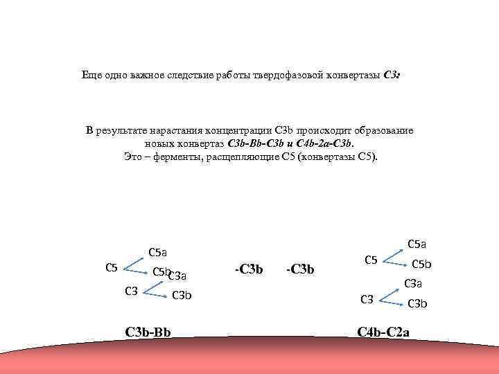 Еще одно важное следствие работы твердофазовой конвертазы C 3: В результате нарастания концентрации C