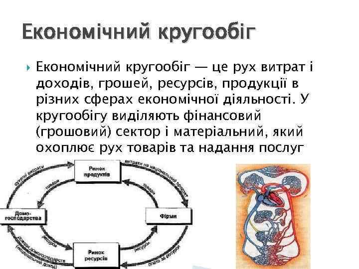 Економічний кругообіг — це рух витрат і доходів, грошей, ресурсів, продукції в різних сферах