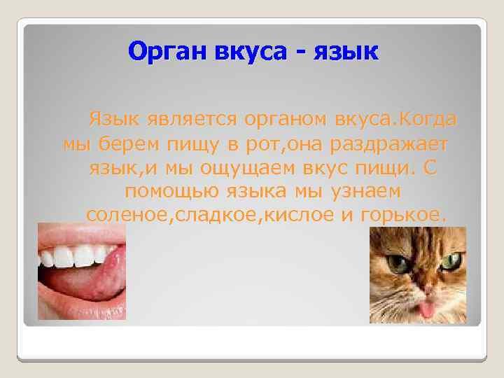 Орган вкуса - язык Язык является органом вкуса. Когда мы берем пищу в рот,