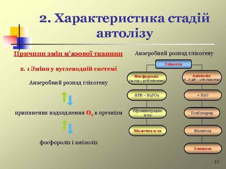 2. Характеристика стадій автолізу Причини змін м'язової тканини Анаеробний розпад глікогену Глікоген 2. 1