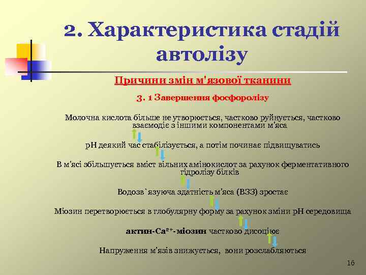 2. Характеристика стадій автолізу Причини змін м'язової тканини 3. 1 Завершення фосфоролізу Молочна кислота
