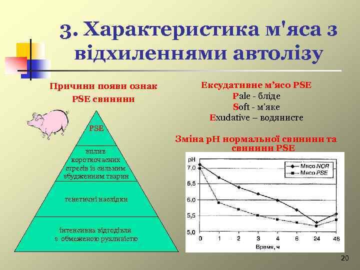 3. Характеристика м'яса з відхиленнями автолізу Причини появи ознак PSE свинини Ексудативне м'ясо PSE