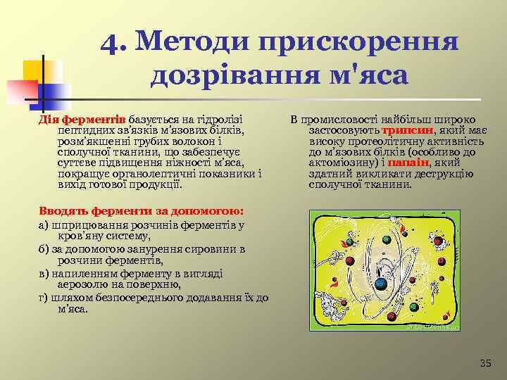 4. Методи прискорення дозрівання м'яса Дія ферментів базується на гідролізі пептидних зв'язків м'язових білків,