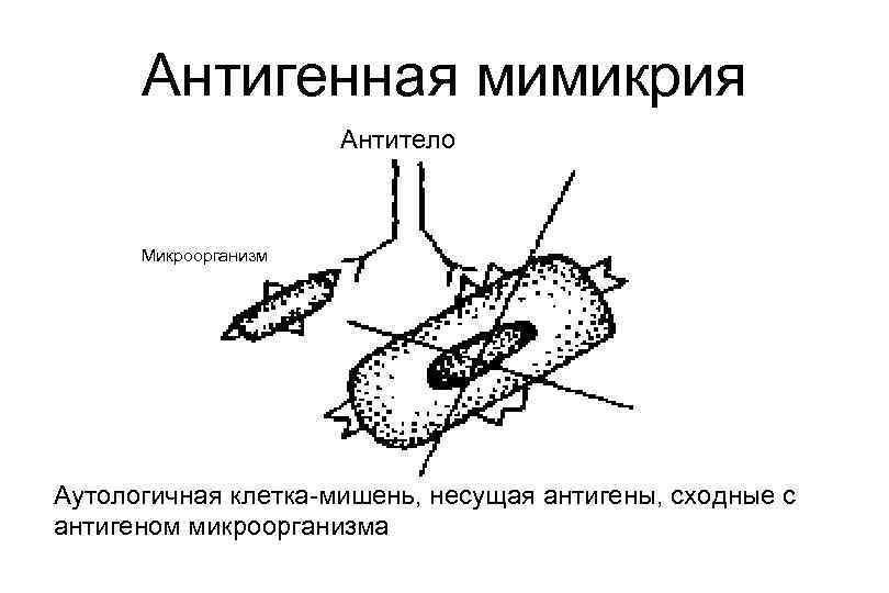 молекулярная мимикрия картинки