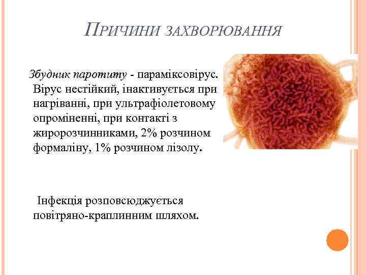ПРИЧИНИ ЗАХВОРЮВАННЯ Збудник паротиту - параміксовірус. паротиту Вірус нестійкий, інактивується при нагріванні, при ультрафіолетовому