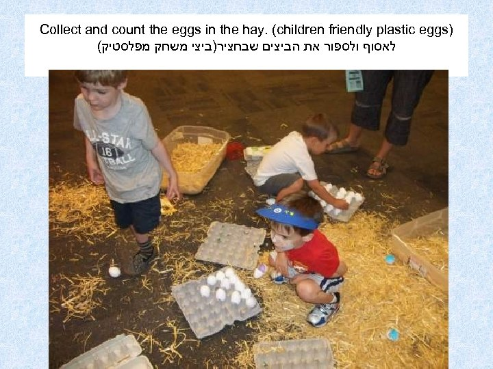 Collect and count the eggs in the hay. (children friendly plastic eggs) ( לאסוף