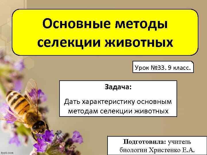 Основные методы селекции животных Урок № 33. 9 класс. Задача: Дать характеристику основным методам