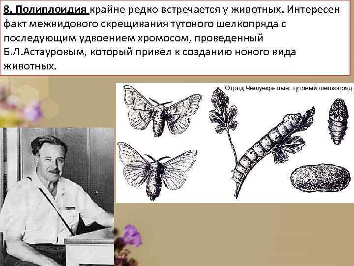 8. Полиплоидия крайне редко встречается у животных. Интересен факт межвидового скрещивания тутового шелкопряда с