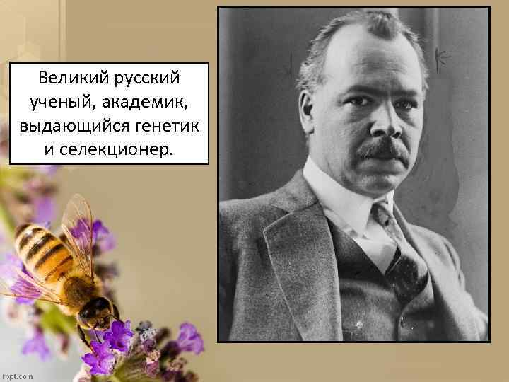 Великий русский ученый, академик, выдающийся генетик и селекционер.