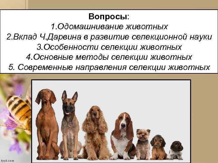 Вопросы: 1. Одомашнивание животных 2. Вклад Ч. Дарвина в развитие селекционной науки 3. Особенности