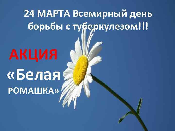24 МАРТА Всемирный день борьбы с туберкулезом!!! АКЦИЯ «Белая РОМАШКА» 24